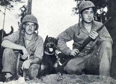 WWII War Dogs
