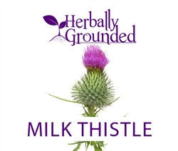 Milk Thistle by Herbally Grounded