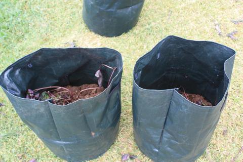 Grow Sweet Potatoes in a Bin