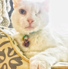 "Load image into Gallery viewer, ""I Love My Cat"" Clear Quartz Cat Necklace + Moonstone Pet Charm Jewelry Set"