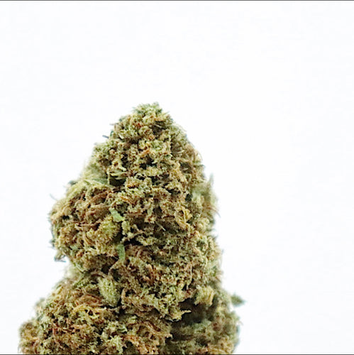 [NEW] Kimber Kush - 13.75% CBD, Sweet Anise, Indica, Rest, Outdoor Grown