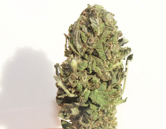 Red Bordeaux -15.6% CBD, Berries, Floral, Tropical, Hybrid, Anytime, Rest, Outdoor Grown