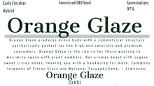 Load image into Gallery viewer, Orange Glaze Feminized CBD Hemp Seeds [20 Pack]
