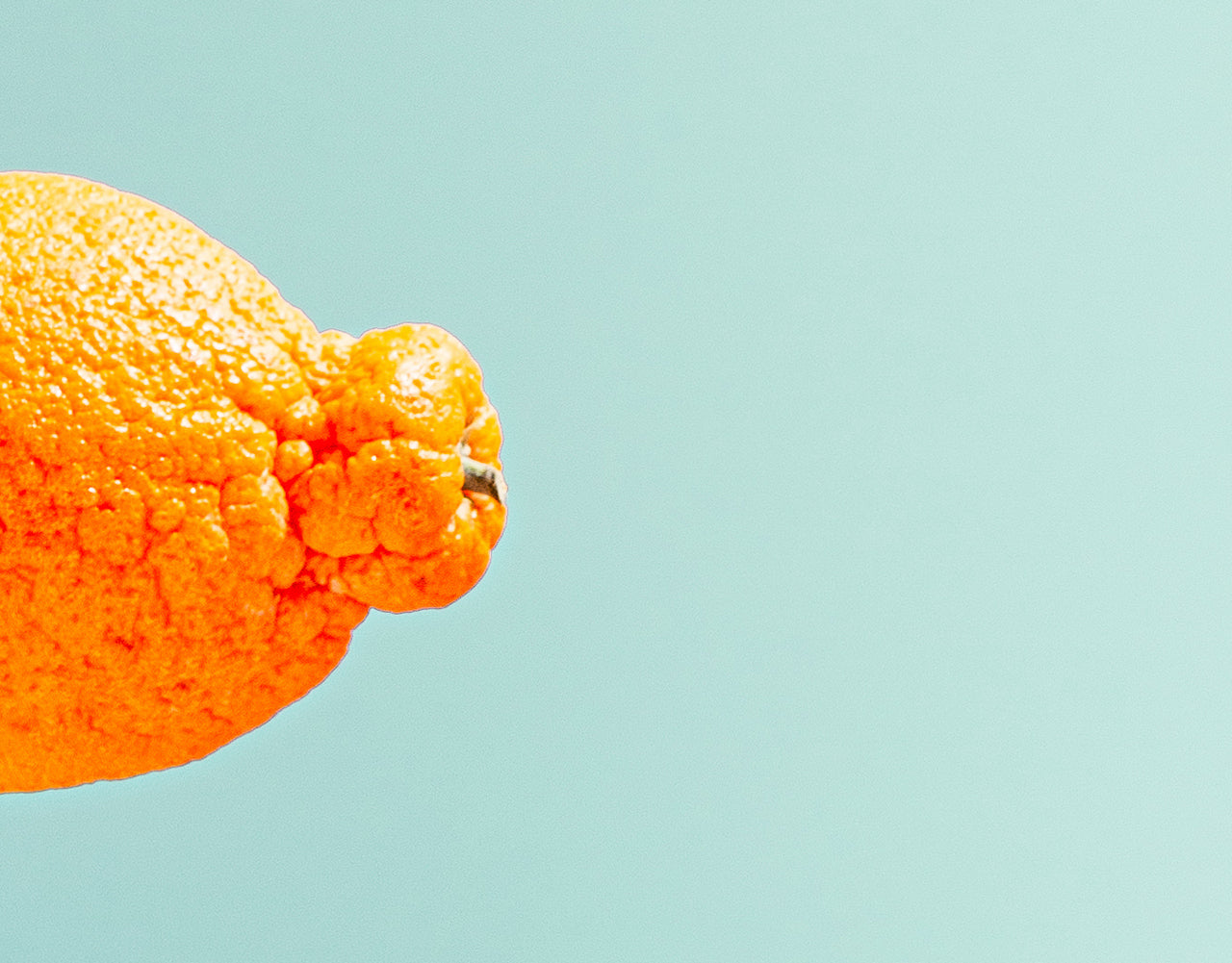 Closeup of a tangerine nub, and the peel's pocky texture, against a cerulean blue background.