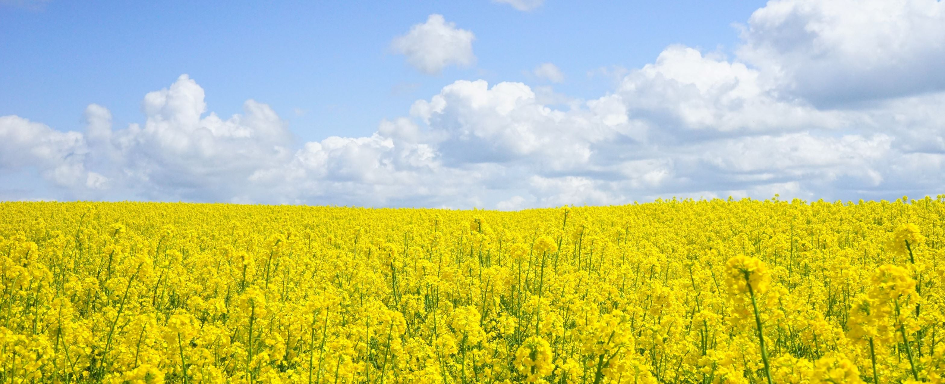 agriculture-bloom-blossom-sky-clean-green-sustainable-fashion