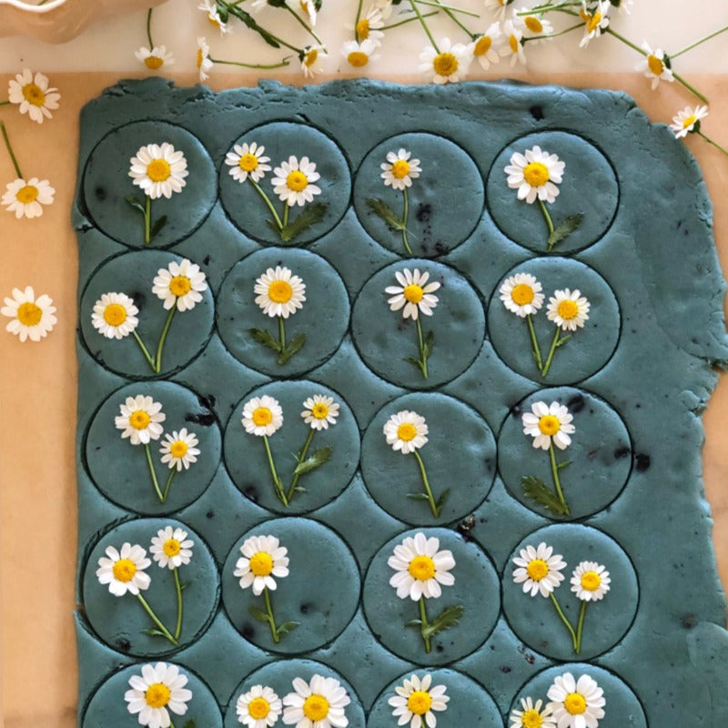 Butterfly Blueberry Daisy Pressed Cookies (1 Dozen)