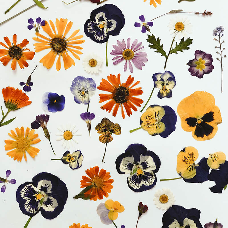 Edible Pressed Flowers