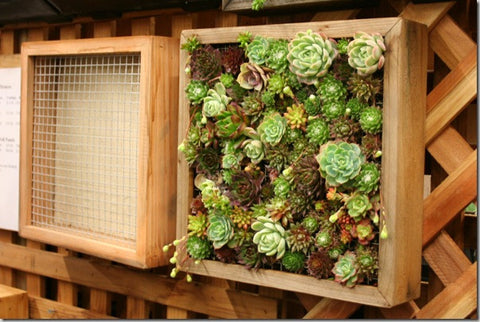 Garden up! Smart Vertical Gardening for Small and Large Space
