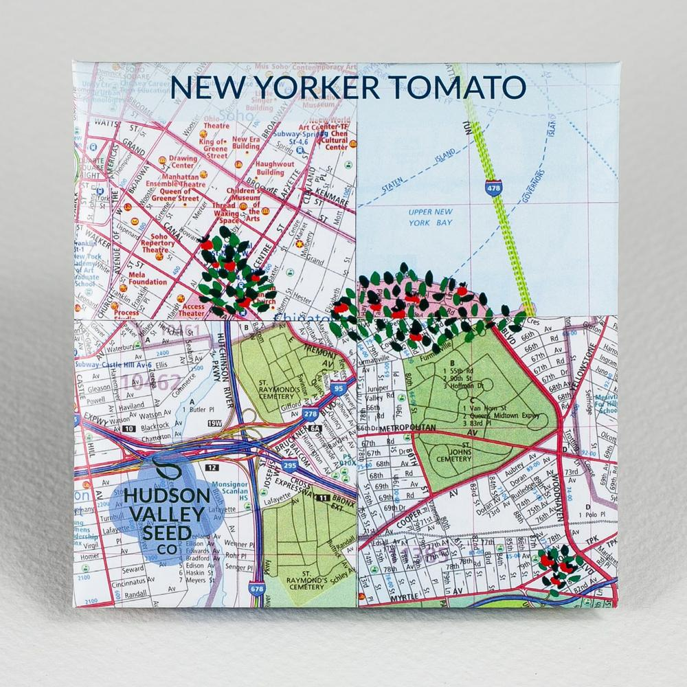 New Yorker Tomato - Art Pack 25 Seeds