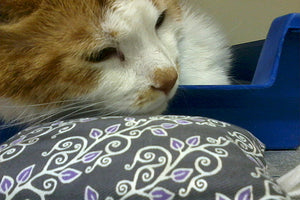 Happy Cat stressfree Pillow
