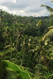 Lush green trees in Bali.