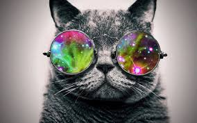 Lovely Cat Sunglasses - Slappable Shades