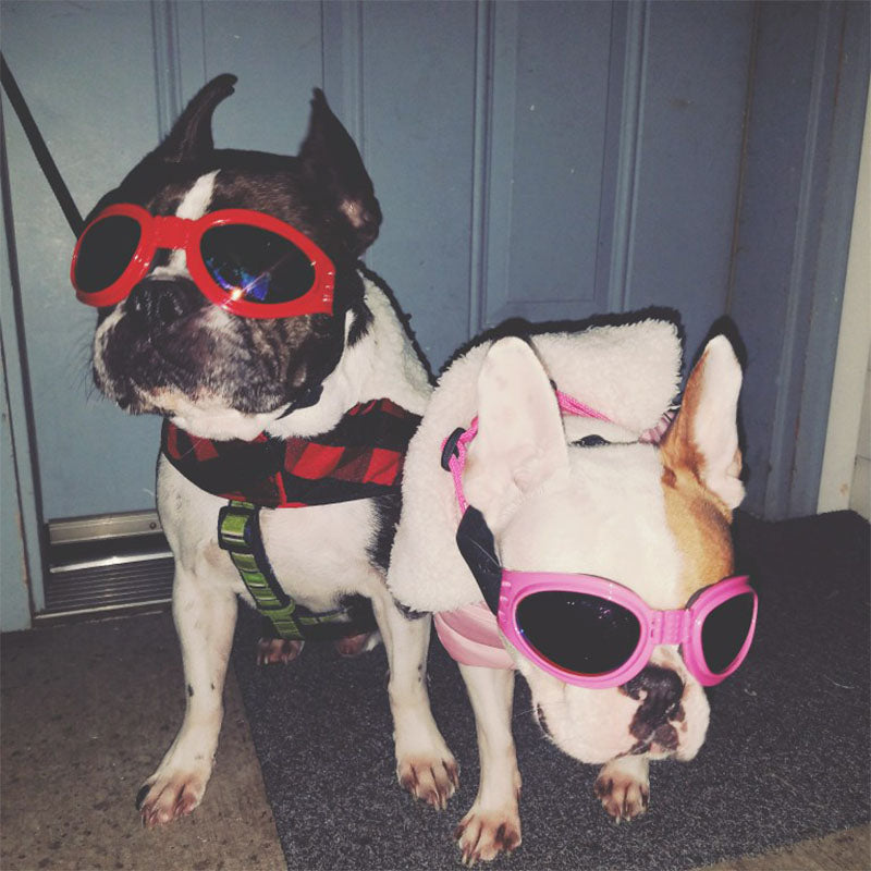 Cool Adjustable Goggles Doggles For French Bulldogs - Slappable Shades