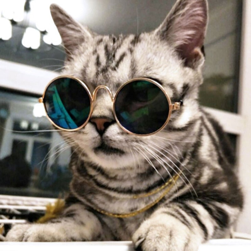 Cool Sunglasses for Puppies and Kittens - Slappable Shades