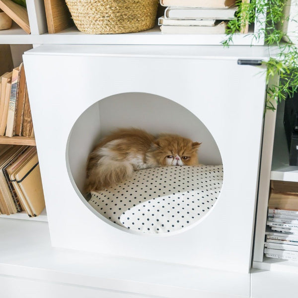 Young User Pet cabinet