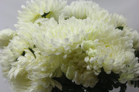 White Chrysanthemum Cluster
