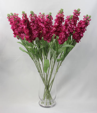 Long Stem Stock (fuschia)