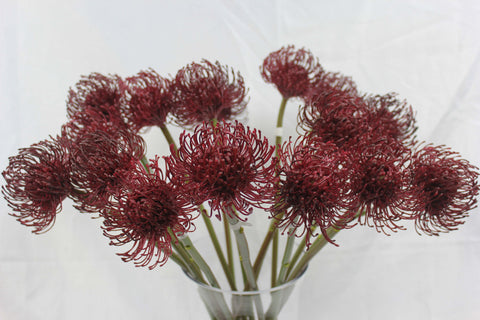 Australian Native Flowers Australia Tastefully Red Leucosperum 5284 Artificial