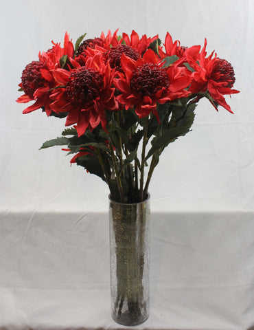 Large red waratah (with leaves)