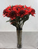 Large red waratah (with leaves) 5278