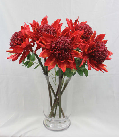 Australian Native Flowers Australia Tastefully Small Red Waratah Leaves 5280