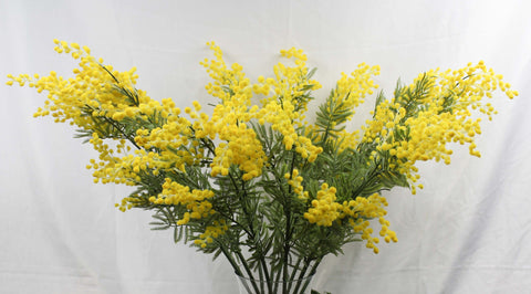 Native yellow wattle 4140