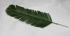Wide Fern Leaf
