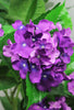 Purple or White Hydrangea Tree