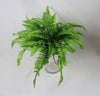 Boston Fern 4079