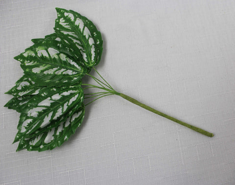 Variegated Rough Edged Leaves