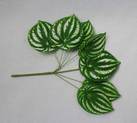 Variegated Smooth Edged Leaves
