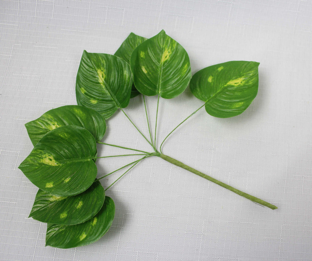Variegated Heart Shaped Leaves