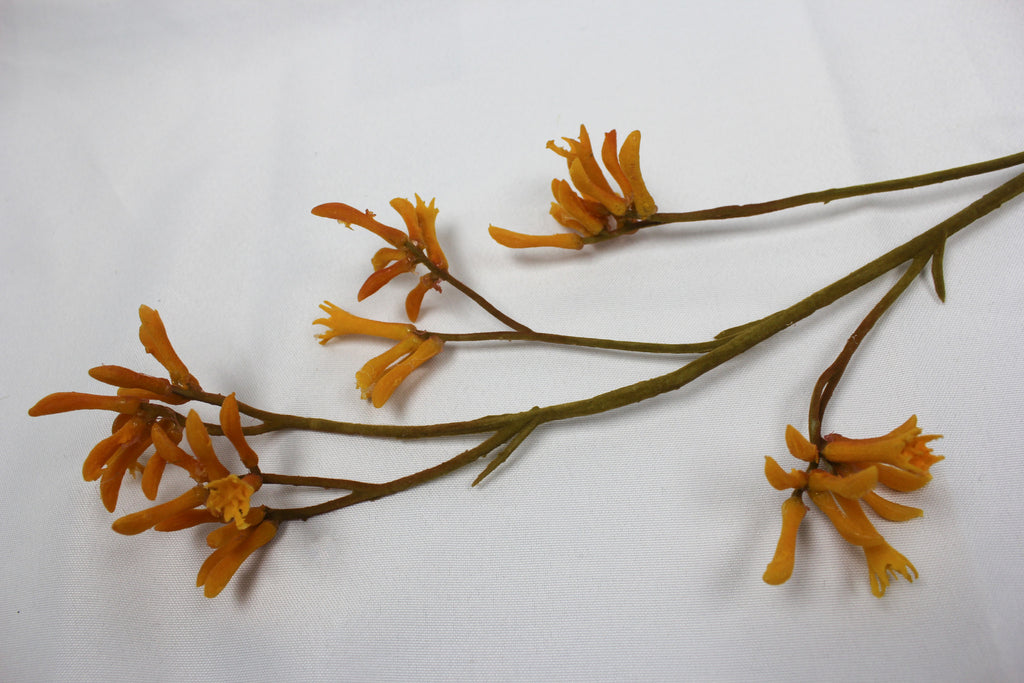 Kangaroo paw orange / yellow 5295