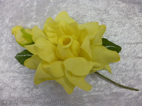 Gardenia & Bud yellow