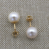 14k White Gold AAA White Round Freshwater Cultured Pearl Stud Earrings with Screwbacks - 10.0-10.5mm