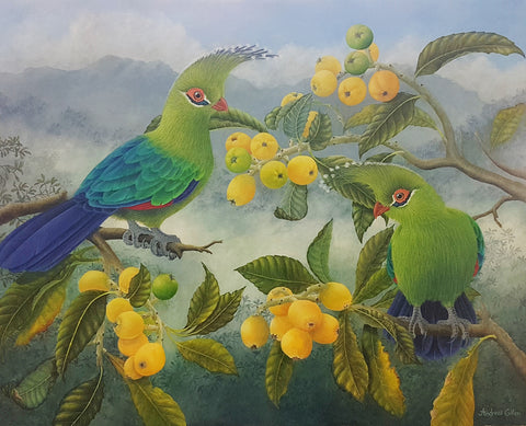 Schalow's Turaco. Lemon Tree