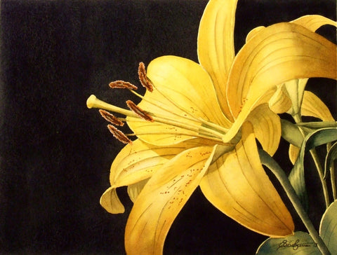 'Yellow Lilly' by Sean Curran - Green Gallery