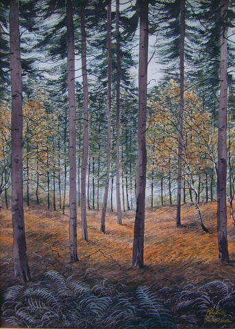 Pine Forest Wicklow - Green Gallery