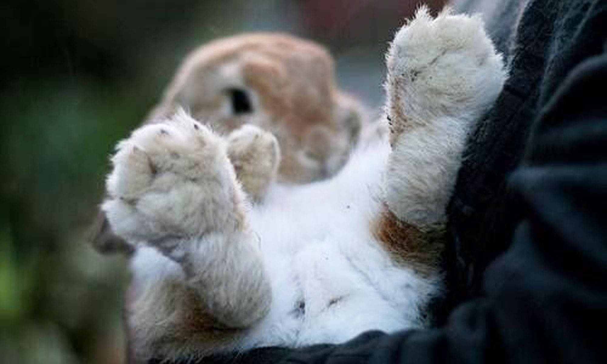Why You Need to Protect  Your Bunny's Feet and How?