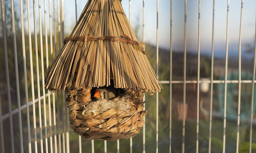 Use These Tips to  Prevent Bird Boredom