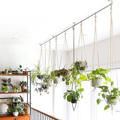 Home decor with hanging plants