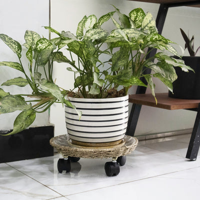 Made Terra Planter Caddy Round Planter Caddy With Wheels (Set 2) | Heavy Duty Plant Stand on Rollers