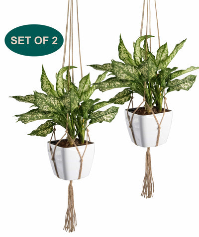 Made Terra Planter Hanger 2 Pack Jute Straw Macrame Planter Hanger | Hanging Planter Rope (47 Inch, 4 Legs)