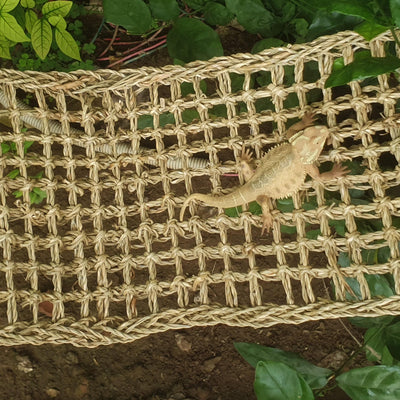 Made Terra Reptile Natural Seagrass Hammock Lizard Lounger | Hammock Swing Lounger Toy Hanging Bed for Anoles, Bearded Dragons, Geckos, Iguanas, and Hermit Crabs