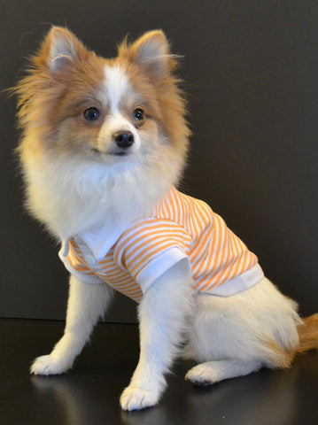 Dog Polo Striped