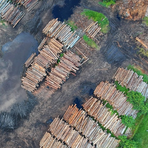 deforestation rain forest wood piles