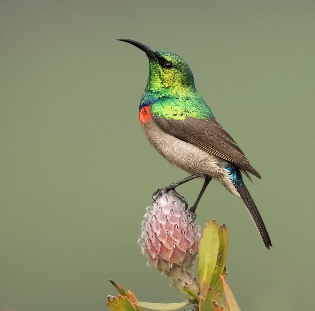 South Africa's favourite garden birds