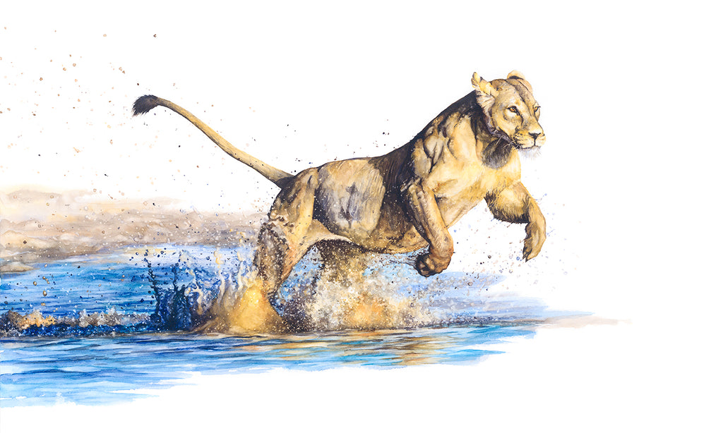 """Splash!"": Lady lion taking a leap"