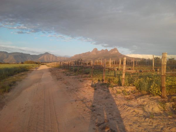 winelands golden hour