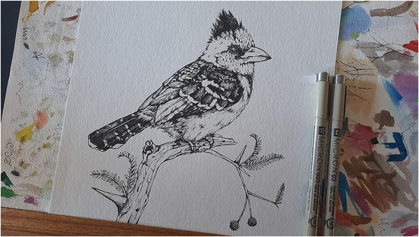 pen illustration of crested barbet